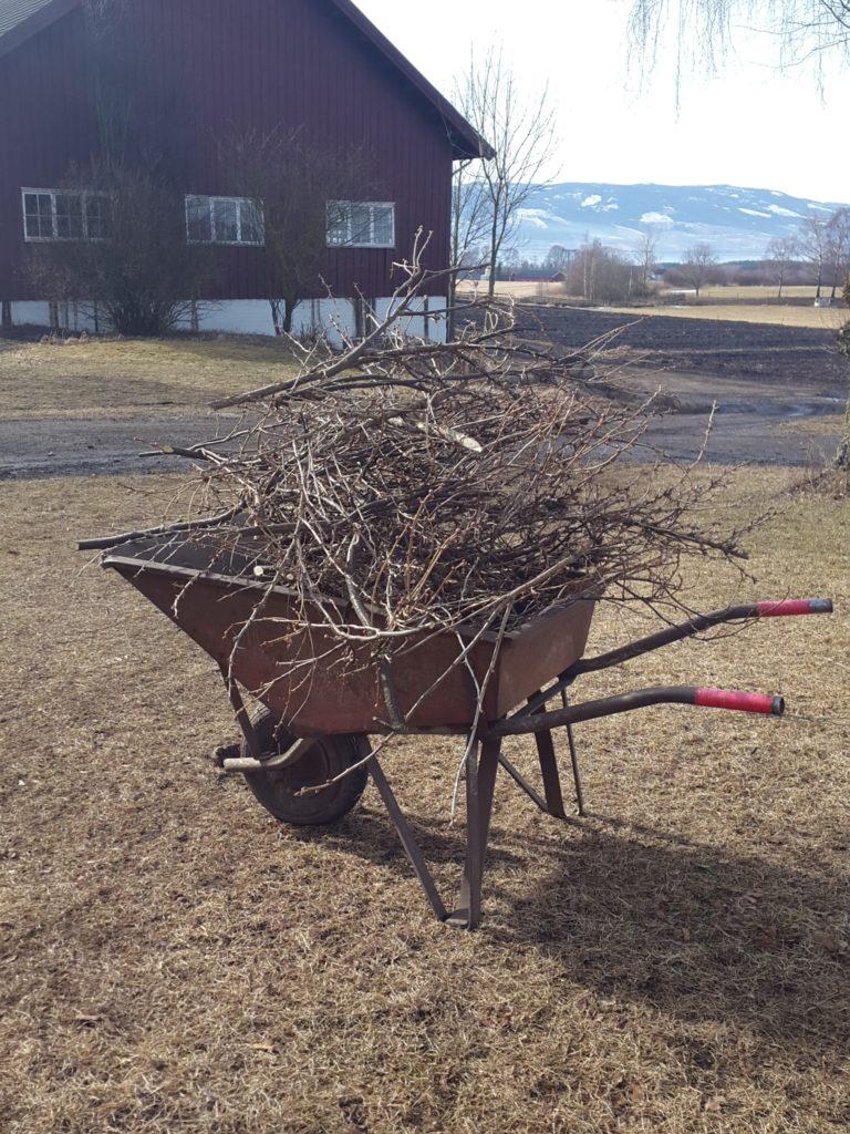 beskjæring av bærbusker